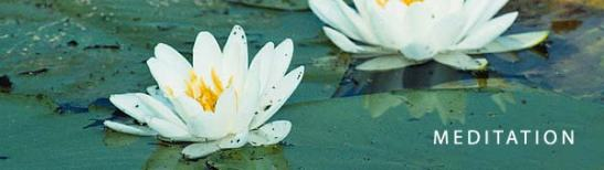 Meditation Header Lotus