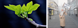 """Two pictures side by side. The first is of a budding fig tree branch. The second of a fringe looking guy holding a sign reading """"the end is near."""""""