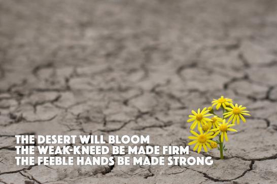 The Desert Will Bloom Isa 35